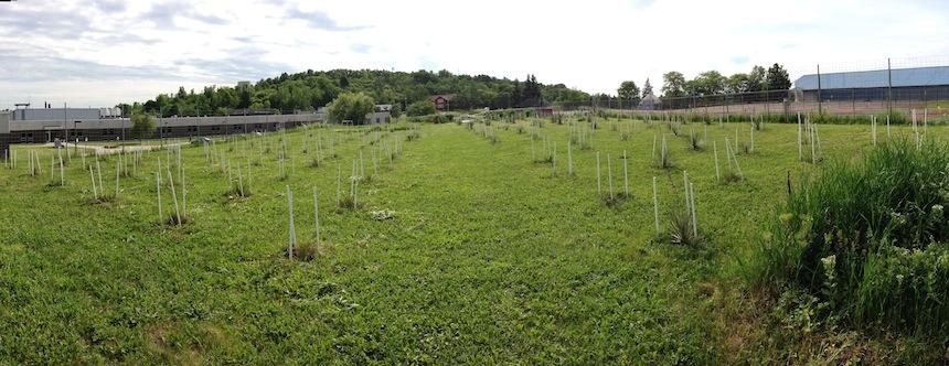 Top section of experimental garden