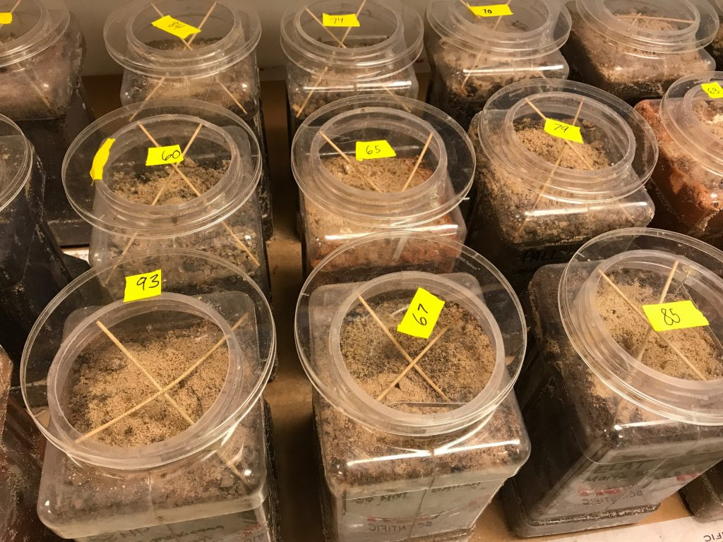Moth rearing containers