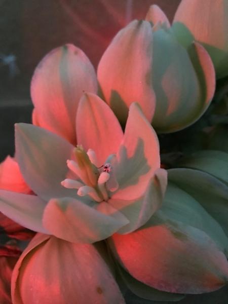 Moth resting in flower